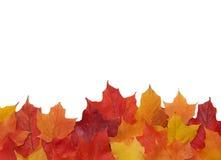 边界秋天叶子 免版税库存图片