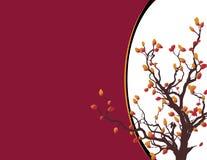 边界秋天结构树 免版税库存图片