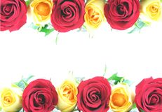 边界红色玫瑰黄色 库存照片