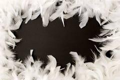 边界羽毛白色 库存图片