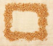 边界耳朵麦子 免版税库存照片