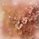 边界花卉柔和的淡色彩 图库摄影