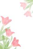 边界花粉红色春天郁金香 免版税库存照片
