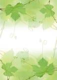 边界葡萄绿色叶子 库存图片