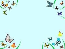 边界蝴蝶 免版税图库摄影