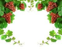 边界装饰葡萄树 库存图片