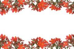 边界设计花卉红色 免版税图库摄影