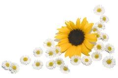 边界雏菊向日葵 库存照片