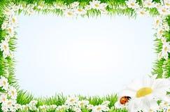 边界雏菊瓢虫春天 库存照片