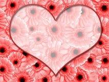 边界雏菊粉红色 库存照片