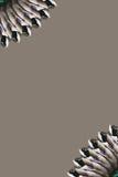边界风扇羽毛野鸭尾标 免版税图库摄影