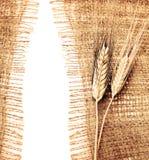 边界麦子 库存照片