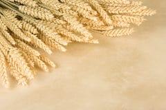 边界麦子 库存图片