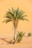 边缘撒哈拉大沙漠 免版税库存照片