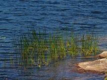 边缘池塘 免版税库存图片