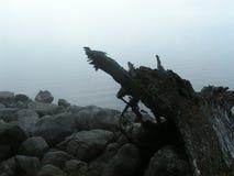 边缘湖日志石头 库存照片