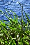 边缘用茅草盖水 库存图片
