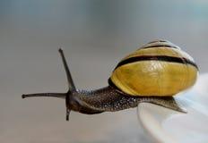 边缘蜗牛 图库摄影