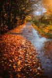 边路在一个秋天雨天 放置在地面上的下落的金黄叶子 在灰色道路的水反射 由后面照的光 库存图片