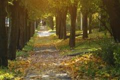 边路在有下落的菩提树的镇在10月离开 库存照片