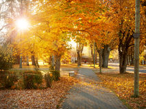 边路在秋季早晨 库存图片