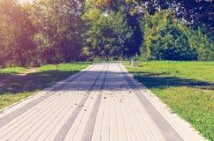 边路在绿色公园 库存照片
