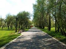 边路排队与美丽的高大的树木 免版税库存照片