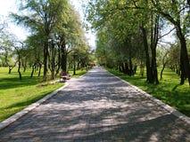 边路排队与美丽的高大的树木 库存照片