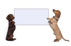 达克斯猎犬拿着横幅的狗爪子 免版税库存图片