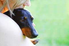 黑达克斯猎犬特写镜头画象在妇女的容忍的 库存图片