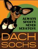 达克斯猎犬狗的被说明的海报 免版税图库摄影