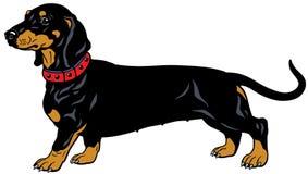 黑达克斯猎犬 库存例证