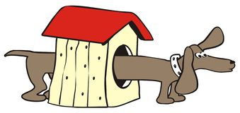 达克斯猎犬-house 免版税库存照片