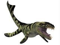 达克龙恐龙 库存照片