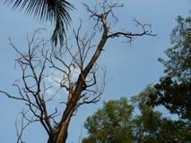 达卡市孟加拉国风景  库存图片