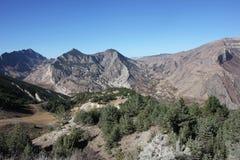 达吉斯坦山的森林 免版税库存照片