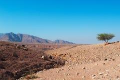 达娜生物圈储备,约旦,中东 库存照片