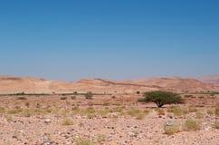 达娜生物圈储备,约旦,中东 免版税库存照片