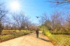达拉斯树木园和植物园 库存照片