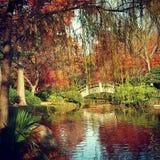 达拉斯植物园 免版税库存图片