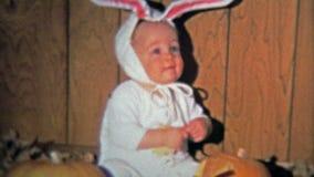 达拉斯, TX - 1971年:当兔宝宝为万圣夜用Jackolantern南瓜雕刻了,婴孩装饰了 股票录像