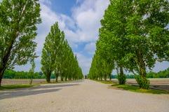 达豪,德国- 2015年7月30日:有美丽的高绿色树的长的石渣路在导致对天主教徒的双方 库存照片