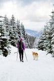 迁徙在有狗的冬天森林里的女孩背包徒步旅行者 库存照片