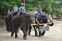 迁徙在泰国的大象 免版税库存照片