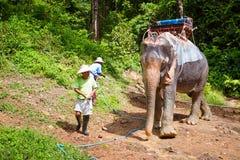 迁徙在泰国的密林的大象 免版税库存照片