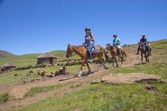 迁徙在莱索托的小马在Semonkong附近 免版税库存图片