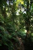 迁徙在酸值张的密林 免版税库存图片