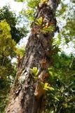 迁徙在酸值张的密林 库存图片