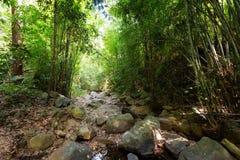 迁徙在酸值张的密林 库存照片