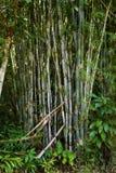 迁徙在酸值张的密林 免版税库存照片